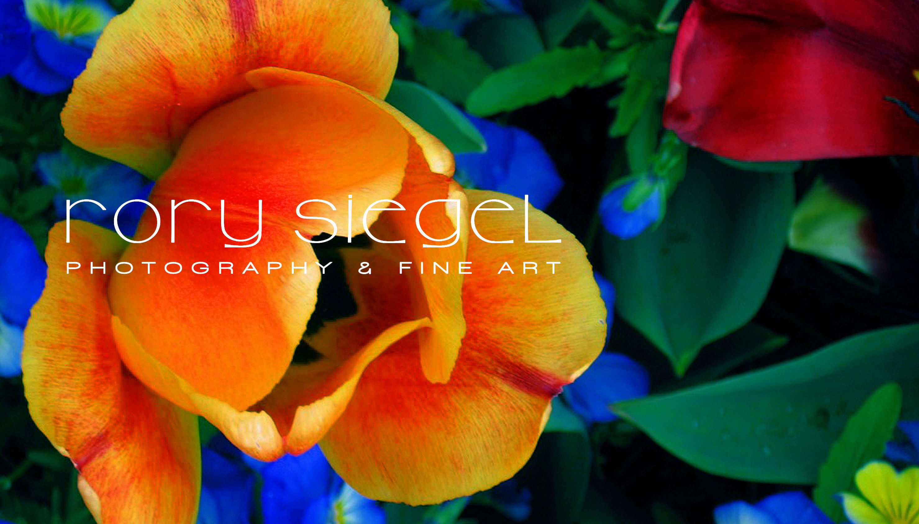 Rory Siegel - Artist Website